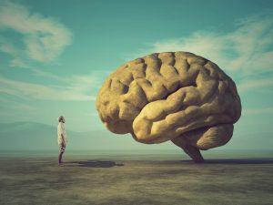 Top 5 des meilleurs livres sur le cerveau