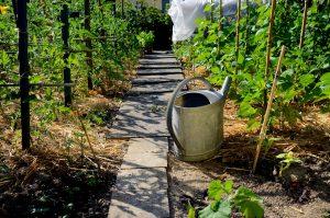 Top 5 des meilleurs livres sur la permaculture